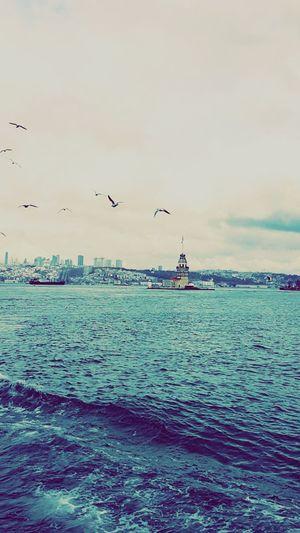 Istanbul Turkey Bogazturu Martılar Vapur Cold Kızkulesi