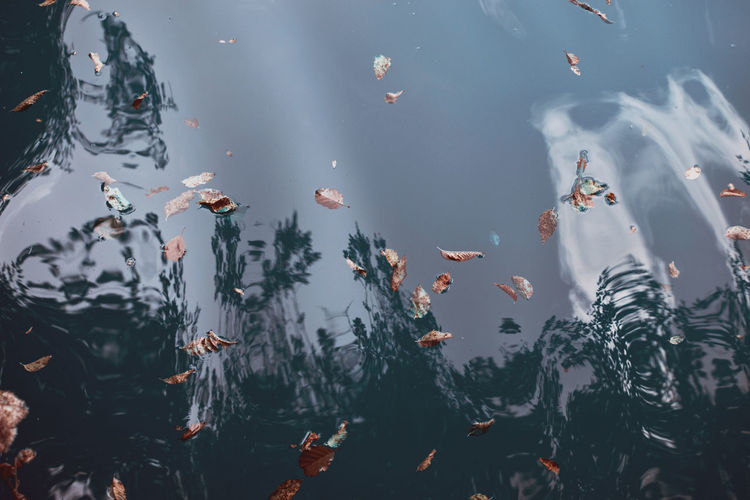 Fallen leaves on a crystal clear lake