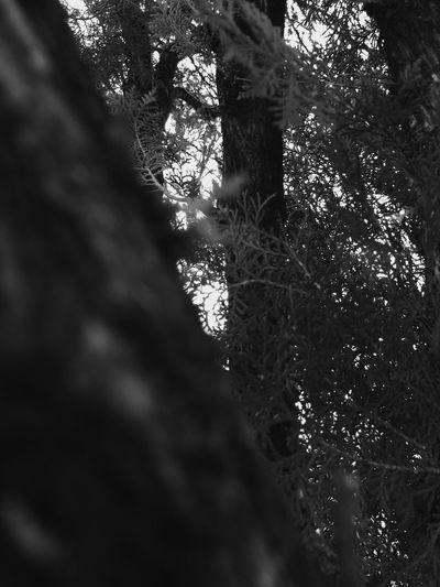 Trees Blackandwhite Shadow Leaves Dark Light And Shadow