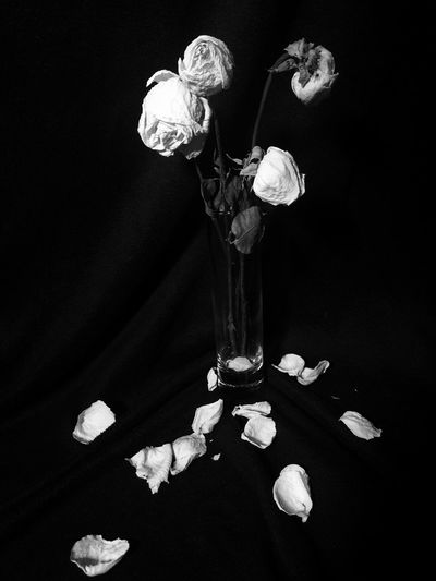 Flower Freshness Rose - Flower Fragility Bouquet Black Background Decoration Electric Light Flower Arrangement Dark Rosé Flower Head Petal Studio Shot Modern Darkroom Dark Room Medium Group Of Objects No People Welcome To Black