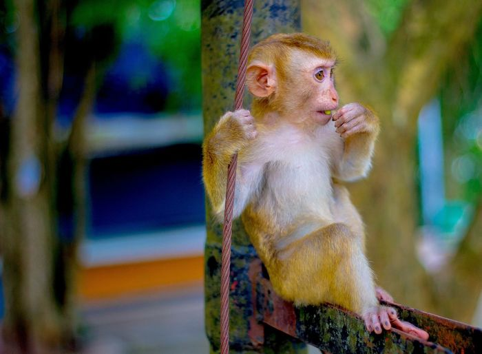 monkey Monkey Monkeys Monkey Forest Animal Forest Thailand Monkey Face Life Fun Girls