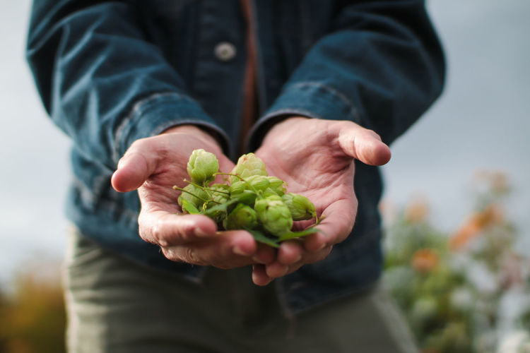 man holding a handful of hops on a farm One Person Holding Midsection Hand Human Hand Freshness Healthy Eating Focus On Foreground Food Food And Drink Casual Clothing Close-up Men Nature Hands Cupped Outdoors Gardening Hops Brewing Brewery Brewing Beer Hops Farm Farm Beer Organic