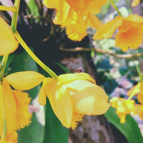 Springtime Yellow Flower Outdoors Orchid Nature Plant Leaf Close-up Beauty In Nature Growth Fragility Day No People Flower Head Freshness First Eyeem Photo