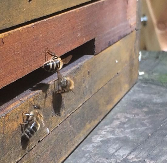 Lunch & Bees Honey Bee