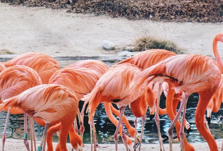 Flamingos perching at lakeshore