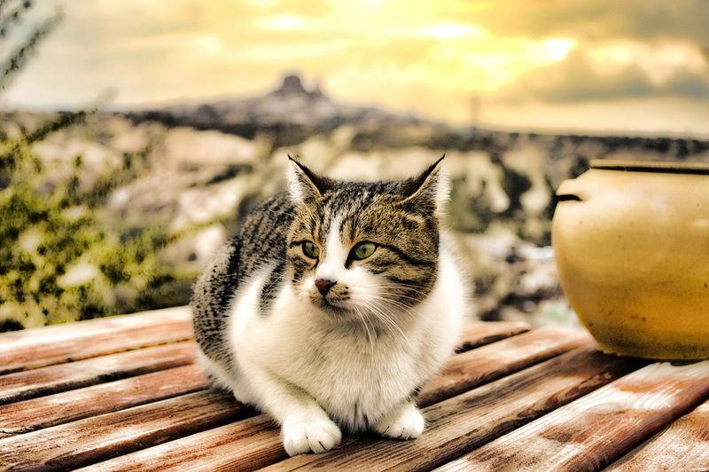 Animals Cute Pets Cute Cats Cat♡