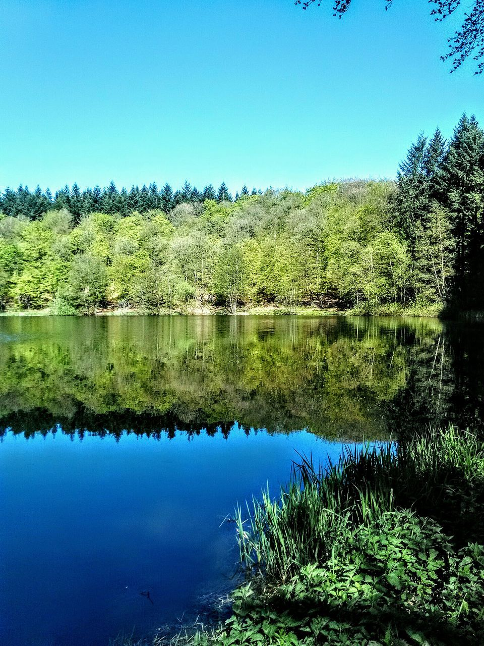 reflection, lake, water, nature, day, tree, clear sky, forest, beauty in nature, outdoors, no people