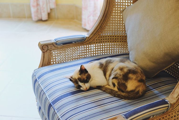 High Angle View Of Cat Sleeping On Armchair At Home