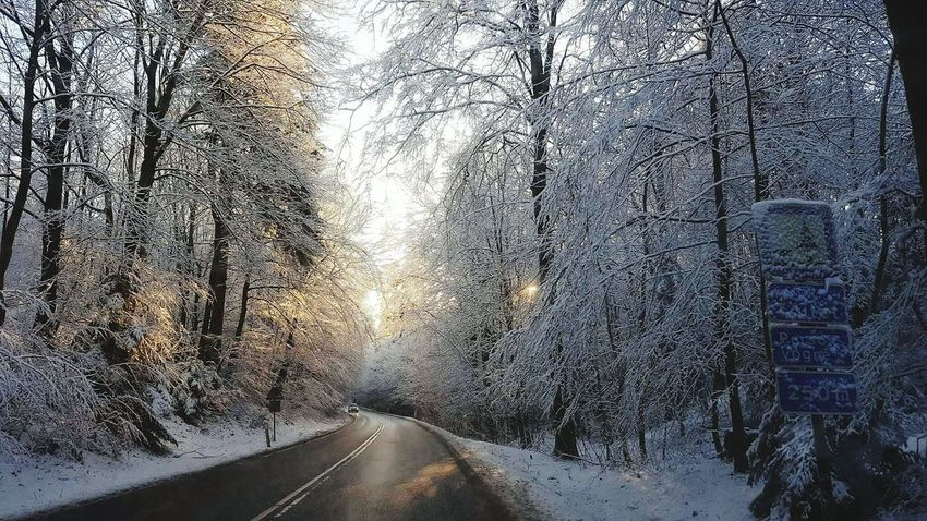 Tree Window Weather Cold Temperature Winter Snow Nature No People Wet Water Day Scenics Sky Beauty In Nature Outdoors Close-up Frosted Glass