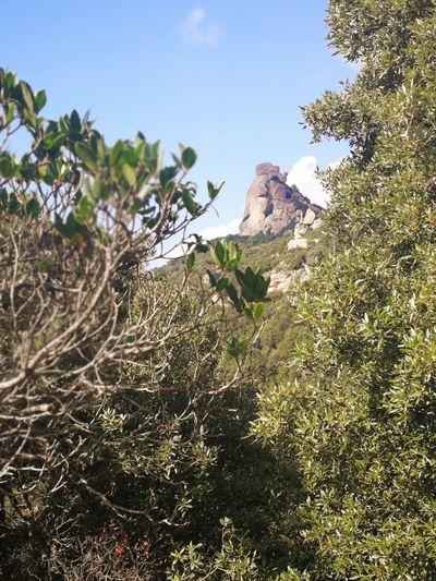 Sardinia Sardegna Italy  Sardinia Sardegna Tree Mountain Sky Rocky Mountains Rock Formation Rock - Object