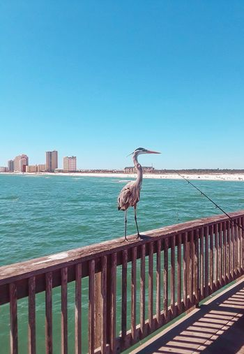 Blue Heron on the pier Water Sky Clear Sky Sea Nature Day Animal No People Blue Animal Themes Railing Vertebrate Bird Sunlight Land Outdoors