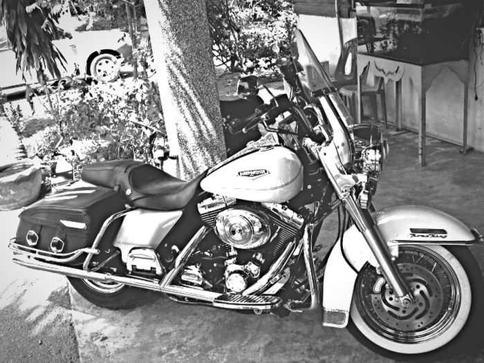 Haley Davidson Motorcycles Motorbike Something Blackandwhite Taking Photos Photo Photography EyeEm EyeEm Thailand