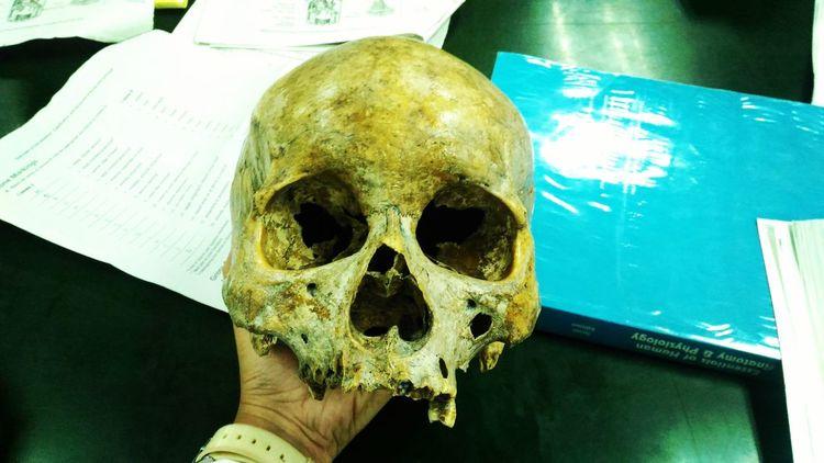 Skull Face Human Anatomy Artsy Photography MyPhotography