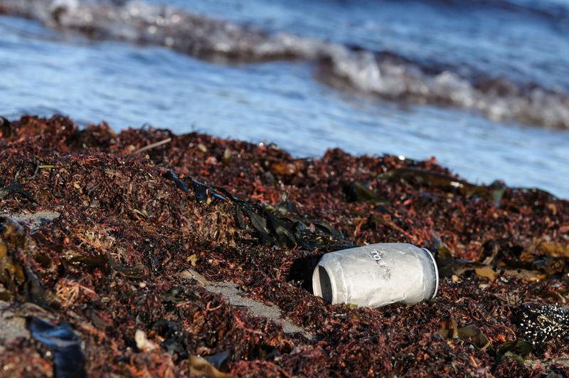 Tin can on dirty beach