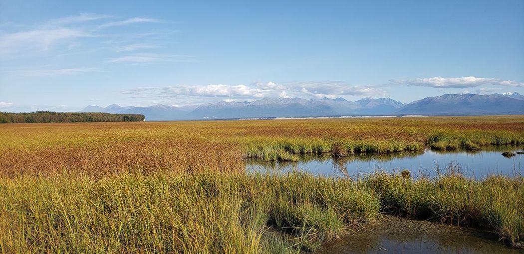 Goose Bay wetlands, Alaska Autumn Alaska Marsh Wetlands Vista Tranquility View Awe Scenics Outdoors Adventure EyeEm Selects Field Sky Wetland Tranquil Scene Idyllic Remote Calm Fall