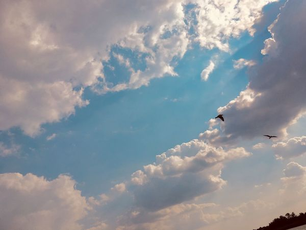 Cloud - Sky Sky Beauty In Nature Nature Flying Scenics - Nature Low Angle View Outdoors Tranquil Scene Vertebrate Tranquility No People Animal Cloudscape Travel Day Animal Themes Idyllic Adventure