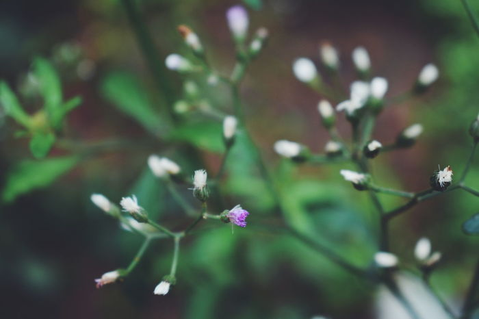Flower Nature Fragility Beauty In Nature No People Freshness Petal Kerala Eyeem Market