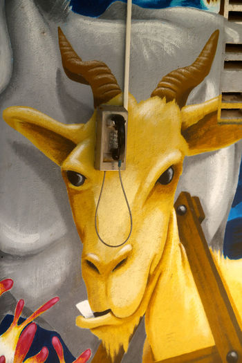 Caribbean Christoffelpark Close-up Communication Forehead Foreheadpower Goats Head No People Online  Still Life Telephone Telephone Booth Telephone Pole Yellow Yellow Color