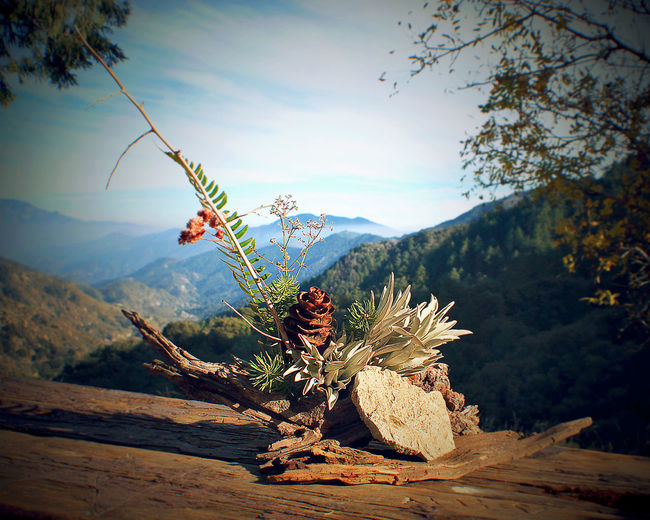 Flower Arrangements Forest Arrangement Beauty In Nature Mountain Mountain Range Nature No People Outdoors Pine Cone