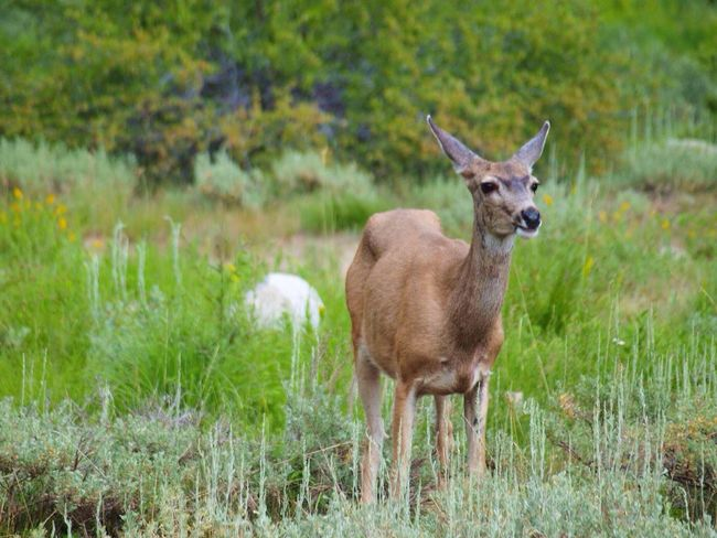 Grass Field Deer Nature Mammal Animals In The Wild Animal Themes Animal Wildlife Outdoors Day No People Standing One Animal Plant Beauty In Nature