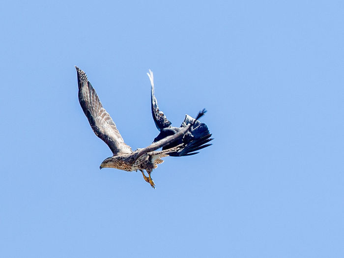 Flying Sky Bird