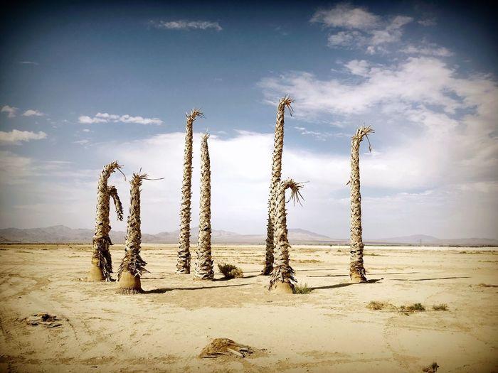 Palm Trees Sun Desert Beauty Desert Lucerne Valley Shadows Desert Colors Iphonephotography IPhone