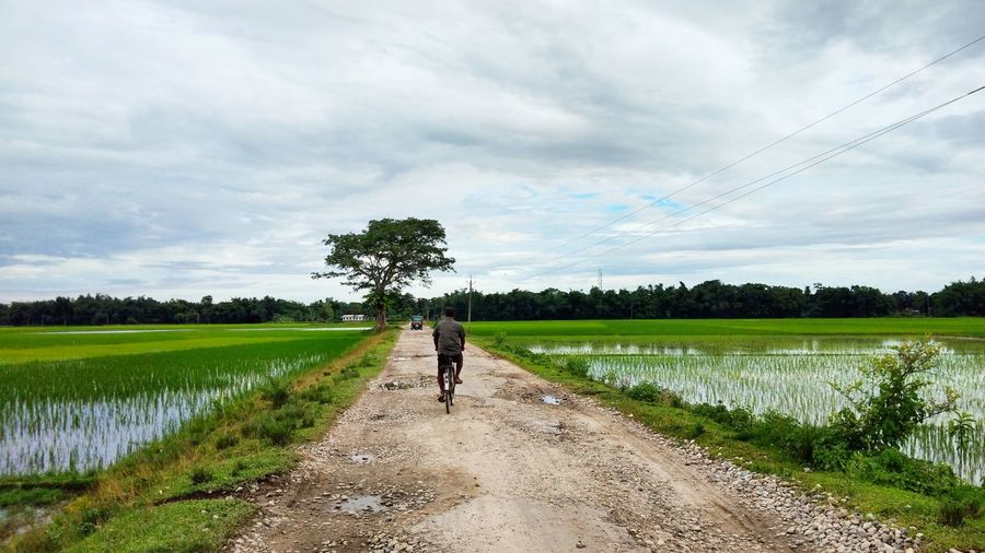 Road between paddy field Paddy Field Assam India Green Road Scenic Beauty In Nature Rural Scene Full Length Cereal Plant Working Irrigation Equipment Agriculture Field Crop  Tree Rice Paddy Dirt Road Plantation Cycling Bicycle Countryside Farm Worker Cultivated Land
