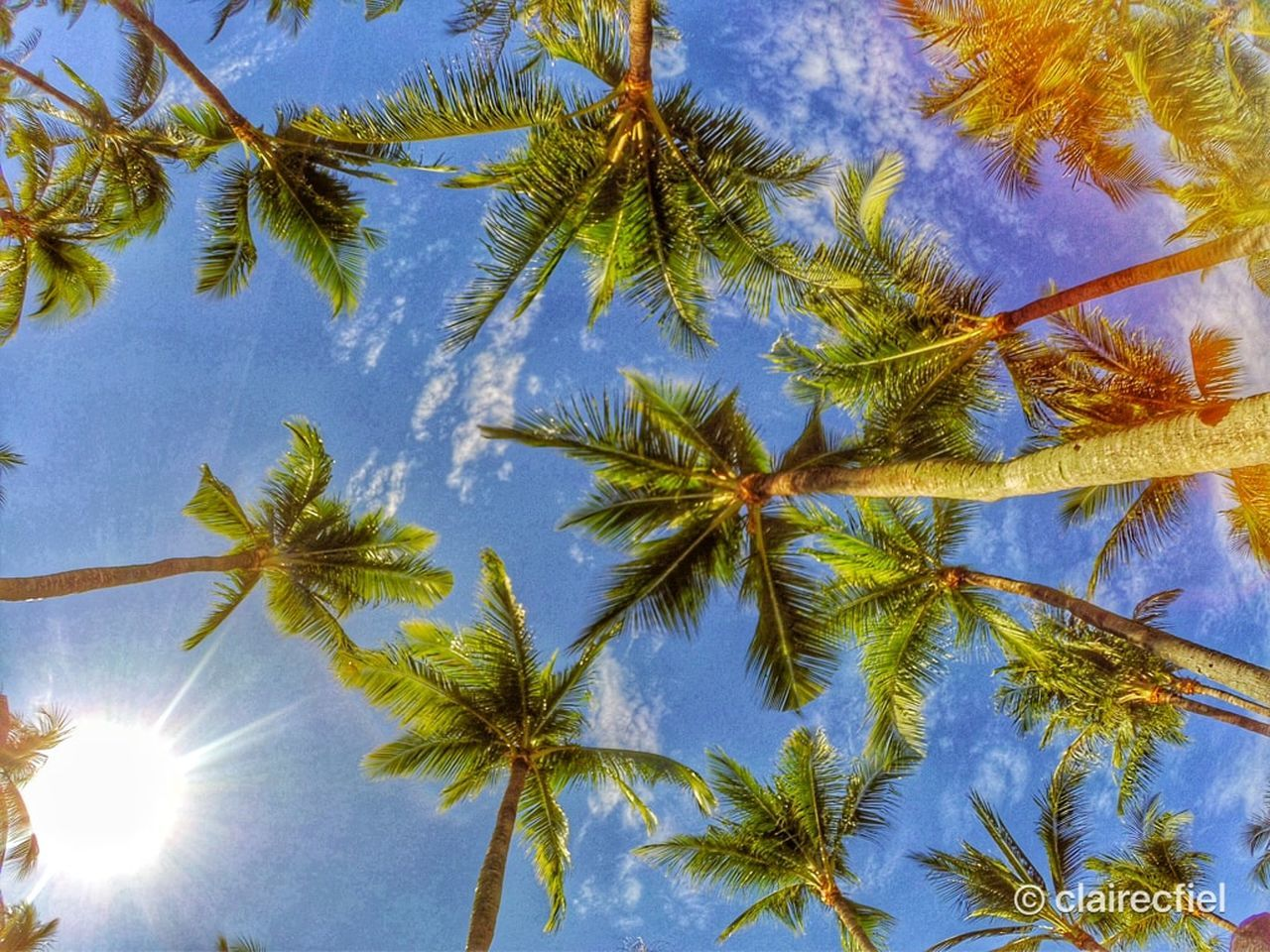 nature, palm tree, tree, beauty in nature, low angle view, growth, sky, scenics, outdoors, day, no people, tranquility, tree trunk