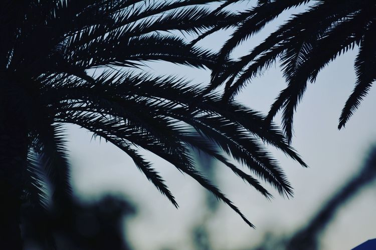 Just came back from my roadtrip. I post Some of the pictures I made throughout my roadtrip. 🚗🌴 hope u enjoy! Roadtrip Palmtree Nature Landscape Summer Beach