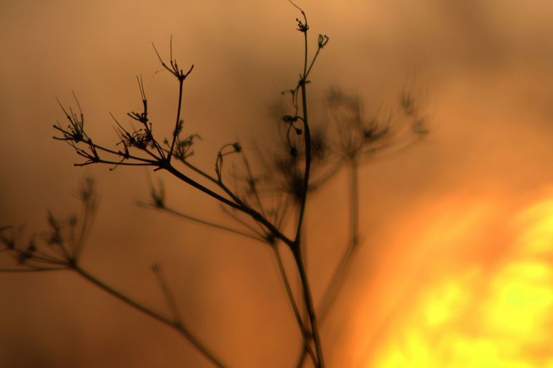 No People Nature Photography Late Summer Morning Sunrise Beauty In Nature Silhoette Of Plants Flower Branch Multi Colored Beauty Rural Scene Dawn Atmospheric Mood Dramatic Sky