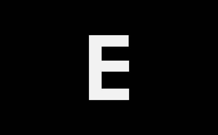 Birds perching on shore at beach against cloudy sky during sunset