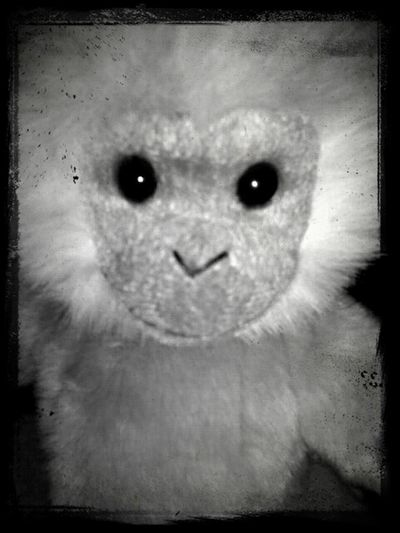 Scary Monkey