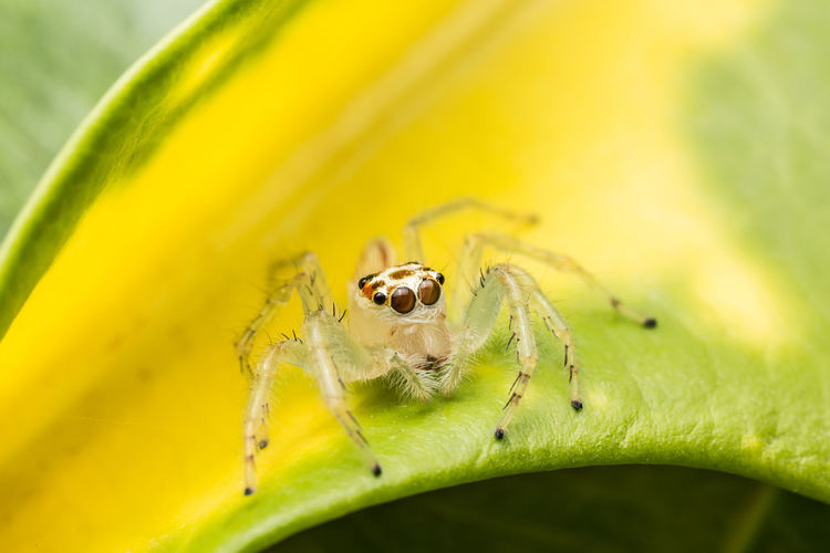 Close-Up Of Spider On Leaf
