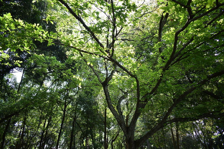Tree Low Angle View Growth Nature Backgrounds Branch Green Color Beauty In Nature Day Outdoors No People Full Frame Forest Sky Nature Photography しぜん Tree Alamsemulajadi Nature_collection Naturelovers Green Green Color Greenery Perspectives On Nature