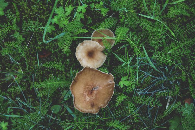 M u s h r o o m s Grass Plant Nature Green Color Outdoors Day Eyem Nature Colors Mushrooms Growth Eyem EyEmNewHere