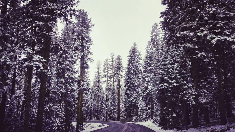 Empty Road Along Trees In Winter