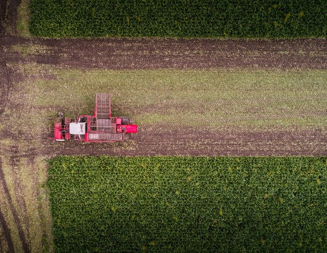 The beet eater Aerial Shot Drone  Farm Farmer Farmland Sugar Beet Aerial Aerial Photography Aerial View Agriculture Beet Eater Crop  Crops Dronephotography Droneshot Farm Farming Farmlife Field Harvest Harvest Time Harvesting Rural Scene Sugar Beet Field Vervaet