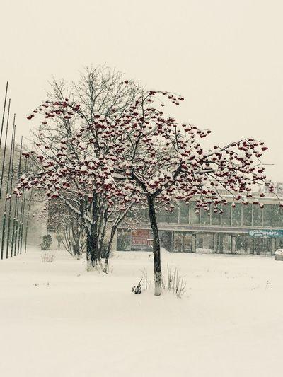 Пришла зима.