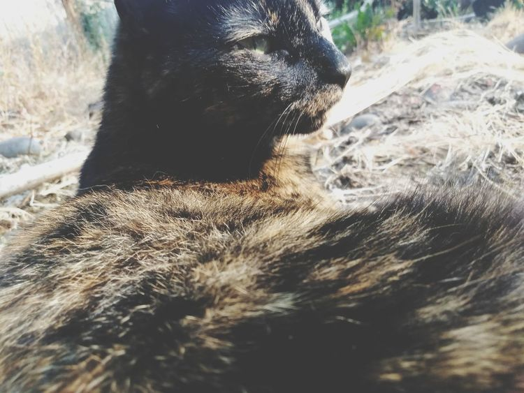 Free Thought, Wandering Quasar Tortoise Shell Tortoiseshell Cat Tortoiselife Tortoise Shell Color Quasar Love Of My Life Love Of My Life❤ EyeEm Selects Sweetgirl Water Low Section Sand Beach Motion Cat Mammal Feline Pets Kitten Whisker Domestic Animals Domestic Cat Carnivora