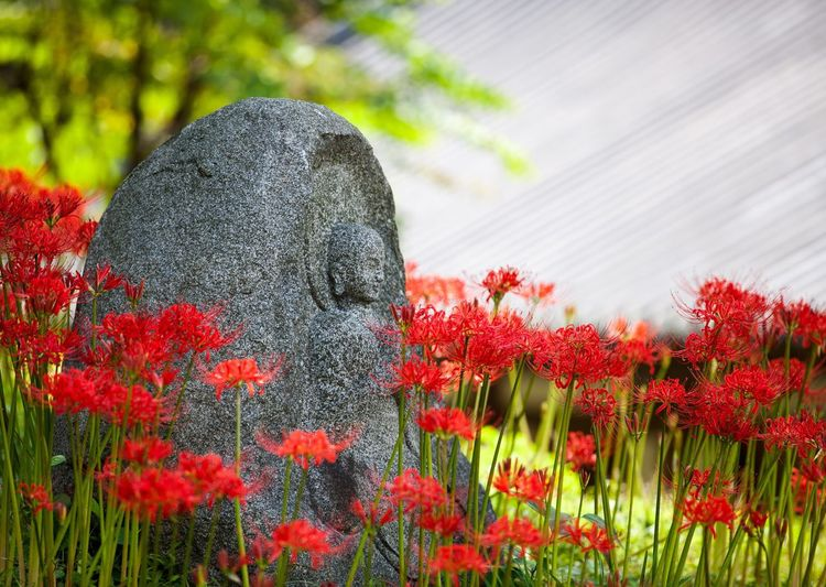 Flower Nature Plant Statue Red Beauty In Nature Blooming