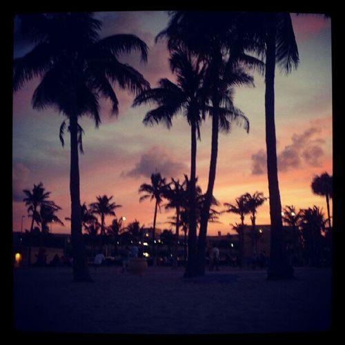 Miami Evening Palmas Best Place Ever