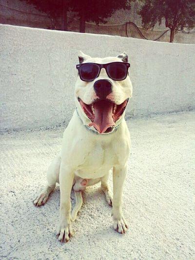 Tango♡ Vitamia Mydogo Dogo Argentino Mybestfriend Passionedogo Amoremio Dogostyle NOTDANGER in Palermo,Sicilia