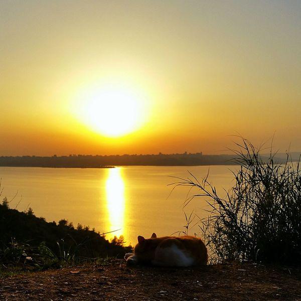 Adana çukurova University Seyhan Baraj Gölü First Eyeem Photo Turkey Cat Sunshine Sunset