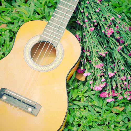 Guitar Musical Instrument String Instrument Music Musical Equipment Acoustic Guitar Plant High Angle View Musical Instrument String Arts Culture And Entertainment No People String Close-up Still Life Nature Day Growth Green Color Wood - Material Flowering Plant Ukulele Garden