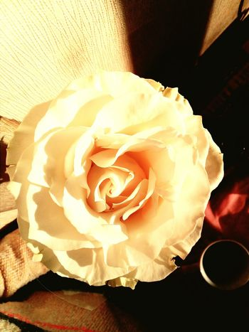 Close-up No People Indoors  Food And Drink Fragility Freshness Day Flower Roses Flowers  Good Morning Morning