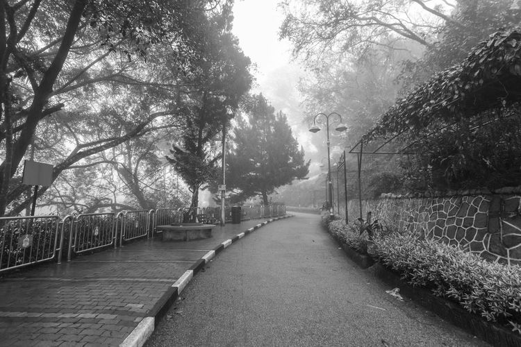 Foggy misty road indicating haunted in Penang Hill Tree Plant Direction The Way Forward Nature No People Growth Day Outdoors Footpath Penang Penang Malaysia Penang Island Transportation Road Diminishing Perspective Tranquility Empty Fog Street Connection Beauty In Nature Treelined Long
