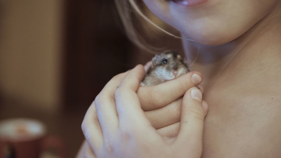 Cropped image of girl holding hamster at home