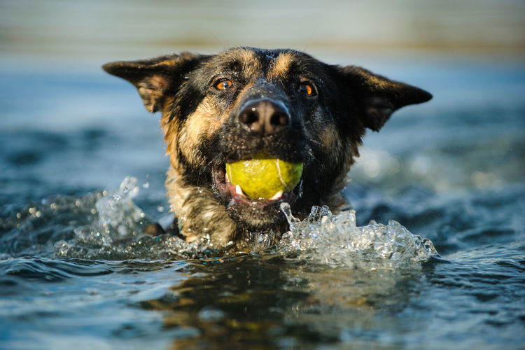 Portrait of dog playing in water