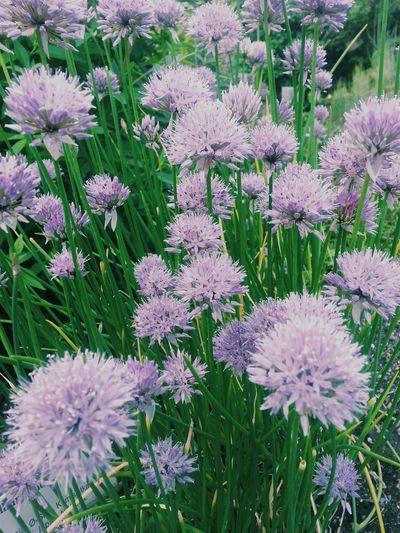 Botanical Garden Oslo Flower Blumen Nature Urban Nature Nature On Your Doorstep Wild Flowers