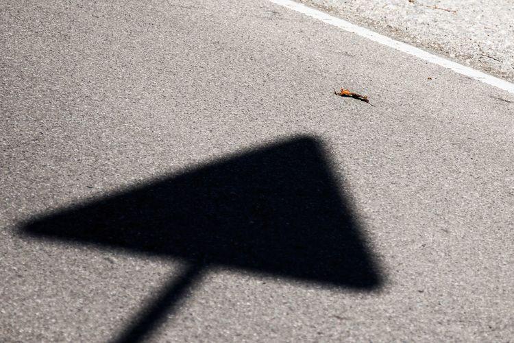 Autumn is here Leaf 🍂 Minimal Autumn Leaves 🍁 Shadow Animal Themes Animal Sunlight Animal Wildlife No People Autumn Mood Day Road Street Close-up Autumn Mood